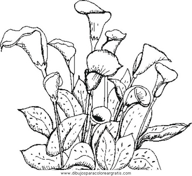 naturaleza/flores/flores_181.JPG