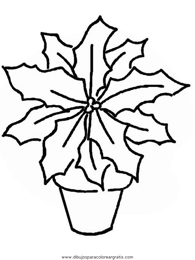 naturaleza/flores/flores_186.JPG