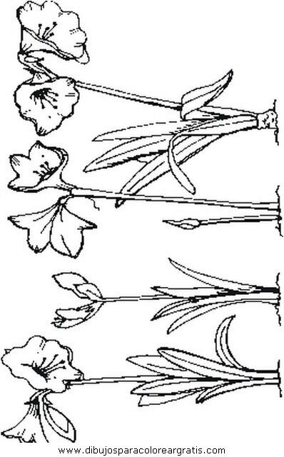 naturaleza/flores/flores_188.JPG