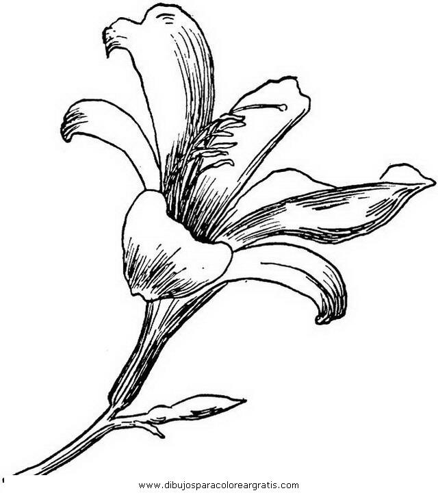 naturaleza/flores/lirios_2.JPG