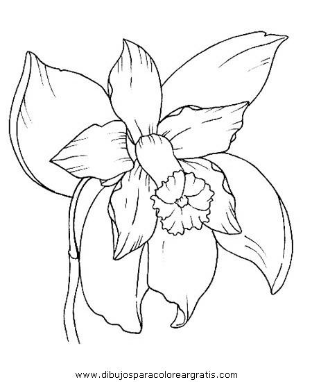 naturaleza/flores/orquidea_orquideas_1.JPG