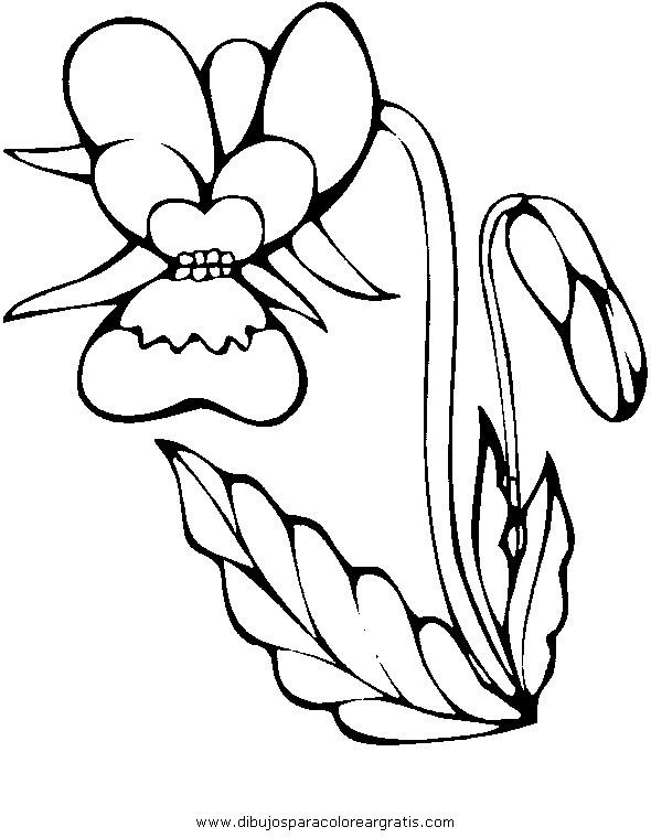 naturaleza/flores/orquidea_orquideas_2.JPG