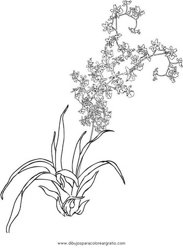 naturaleza/flores/orquidea_orquideas_4.JPG