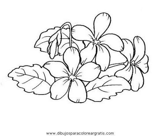 naturaleza/flores/viola.JPG