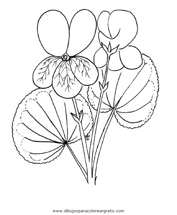 naturaleza/flores/viola_violetta_3.JPG