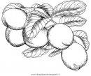 alimentos/fruta/cocos_0.JPG