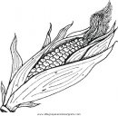 alimentos/verdura/corn_pannocchia.JPG