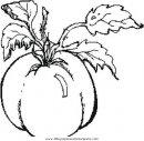 alimentos/verdura/tomato_pomodoro.JPG