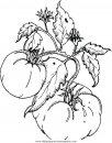 alimentos/verdura/tomatoes_pomodori.JPG