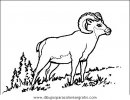 animales/animales_varios/animales_varios_052.JPG