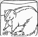 animales/animales_varios/animales_varios_076.JPG