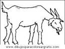animales/animales_varios/animales_varios_108.JPG