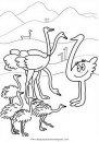 animales/animales_varios/avestruz_2.JPG