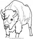 animales/animales_varios/bisonte_bisontes_35.JPG