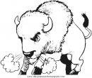 animales/animales_varios/bisonte_bisontes_36.JPG