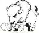 animales/animales_varios/bufalos_1.JPG