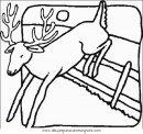 animales/animales_varios/ciervo_4.JPG