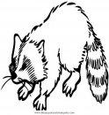 animales/animales_varios/mapache_2.JPG