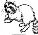 animales/animales_varios/mapache_6.JPG