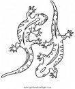 animales/animales_varios/salamandra_1.JPG
