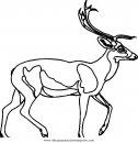 animales/animales_varios/venado_venados_5.JPG