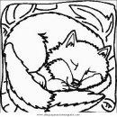 animales/animales_varios/zorra_5.JPG