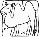 animales/camellos/camellos_14.JPG