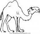 animales/camellos/camellos_16.JPG