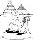 animales/camellos/camellos_19.JPG