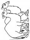 animales/camellos/camellos_24.JPG