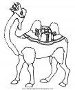 animales/camellos/camellos_28.JPG