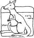 animales/canguros/canguros_57.JPG