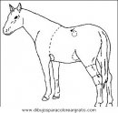 animales/cavallos/cavallos_08.JPG