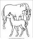 animales/cavallos/cavallos_40.JPG