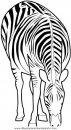 animales/cebras/cebras_01.JPG