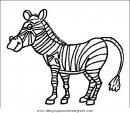animales/cebras/cebras_11.JPG