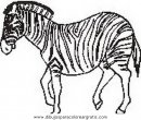 animales/cebras/cebras_12.JPG