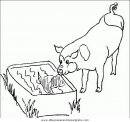 animales/cerdos/cerdos_15.JPG