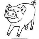 animales/cerdos/cerdos_31.JPG