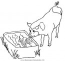 animales/cerdos/cerdos_32.JPG