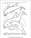 animales/delfines/delfines_42.JPG