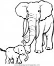 animales/elefantes/elefantes_13.JPG