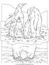 animales/focas/focas_12.JPG
