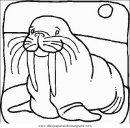 animales/focas/focas_21.JPG