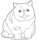 animales/gatos/gatos_011.JPG