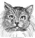 animales/gatos/gatos_059.JPG