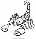 animales/insectos/alacran_4.JPG
