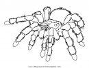 animales/insectos/aranas_07.JPG