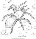 animales/insectos/aranas_11.JPG