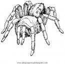 animales/insectos/aranas_13.JPG